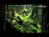 Aquascaping- The Art of the Planted Aquarium 2013 XL, pt 1 https://vk.com/natureaqua_fish