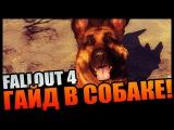 Fallout 4 | Как дублировать любые предметы - гайд в собаке на баг в игре!
