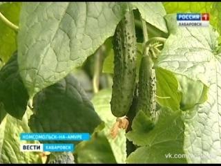 Вести-Хабаровск. Новая теплица в Комсомольске-на-Амуре