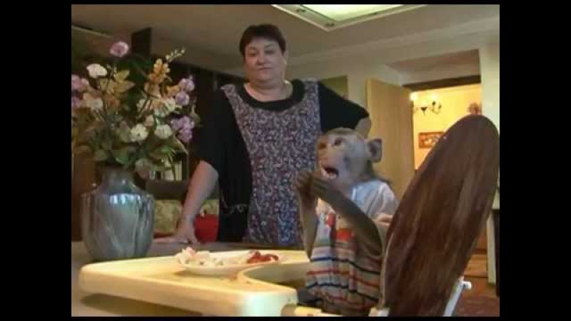 Макака Семен любит семечки. Monkey loves sunflower seeds
