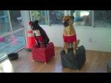 Leroy's Fit Pit Dog Aerobics Workout Video