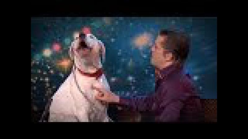 Dog sings Whitney Houston | Belgium's Got Talent | VTM