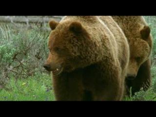 Твои весёлые друзья-зверята. Сериал для детей из 26 серий. 22 серия. Медведь Гризли.