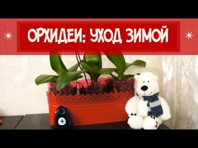 ОРХИДЕИ: УХОД ЗИМОЙ. ПОВЫШАЕМ ВЛАЖНОСТЬ/ ORCHID : WINTER CARE. HUMIDITY » Freewka.com - Смотреть онлайн в хорощем качестве