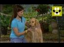 Как чистить зубы собаке? В мире домашних животных. Дай Лапу