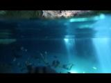 Don Diablo – On My Mind (Jay Alvarez, Alexander Tikhomirov summer 2015)