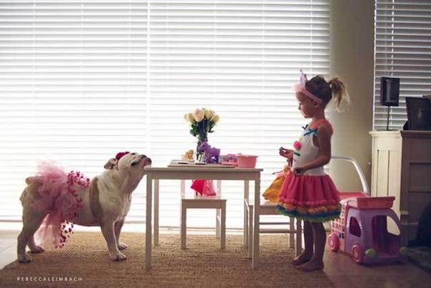 корм для собак royal canin цена
