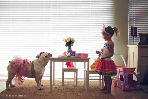 royal canin medium 7