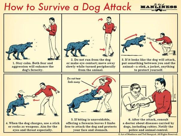 как отбить атаку собаки