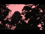 Совенок ушастой совы