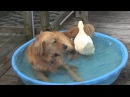 The Story Of Duck And Dog
