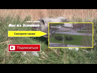 Не званные гости / Полуостров Крым / автокемпинг Капсель
