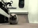 Alles Gute Zum Geburtstag, Lustige Katzen, Stil! 1 Zu Viel Katzenminze