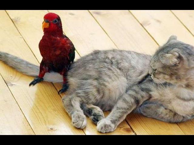 Наглый попугай и кот Приколы с животными
