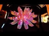 3 ЛАЙФХАКА!  КАК КРАСИВО НАРЕЗАТЬ ЛУК!!  Цветы из лука! Как красиво оформить стол.