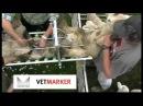 Vetmarker - Lamb Docking Contractor Farmer Lamb marking, lamb docking and lamb tailing