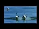 Птицы танцуют лезгинку_low