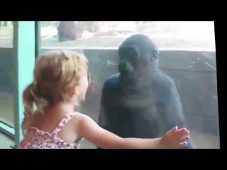 Дети и животные в зоопарке. Приколы с животными