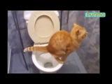 Угарные, сумасшедшие и умные животные выкладываются на полную! 2 / Czy animals! (Fun) 2.