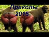 Приколы 2015 Май: Футбол со львами, дом-2, Путин и ребёнок