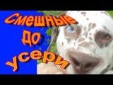 Приколы с собаками и кошками. Пёс уснул стоя! Топ приколы с животными 2016 Топ приколы | Top 10