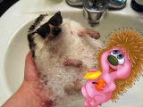 Приколы с животными, смешные видео ролики про животных