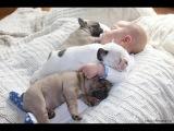 Лучшая подборка Собаки и Дети!Приколы с Детьми! / The best selection Dogs and Children.