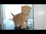 Кошки - лучшие домашние животные! Кошки и смешное видео про кошек. Смешные кошки - это очень весело!