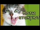 Смешные коты Атакуют | Самое Смешное Видео про котов
