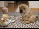 Приколы с детьми и животными - Приколы+про+детей+с+животными