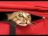 Смешные кошки 1 ? Приколы с животными лето 2014 ? Funny cats vine compilation ? Part 1