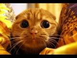 Приколы с котами - ТОПовая подборка!