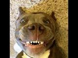 Смешные собаки 4 ? Приколы с животными лето 2014 ? Funny dogs vine compilation ? Part 4