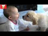 Дети и животные 5 ? Приколы с животными осень 2014 ? Dogs & Cute Babies Compilation ? Part 5