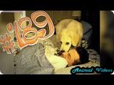 Приколы с животными №189   Собака будильник  Смешные животные  Animal videos