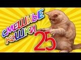 Смешные кошки 25 ? Приколы с животными 2015 - коты ? Funny cats vine compilation - Part 25