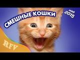 Самые смешные кошки #7 • Приколы с животными 2015 • Best Funny Cats Compilation · Part 7