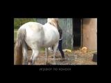 Люди и лошади. Игры с лошадьми. Приколы с животными