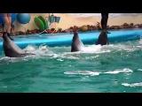 Приколы с животными. Дельфины умеют петь, и танцевать ламбаду.