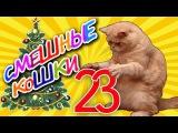 Смешные кошки 23 ? Коты против Ёлок - Приколы с животными 2015 ? Funny cats vine compilation