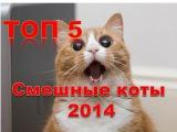 ТОП 5. Смешные коты 2014. Приколы 2014. Лучшая видео подборка приколов с кошками