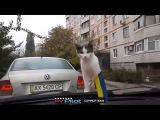 Смешное видео 2015 Подборка смешного видео #2 Из России с любовью #2