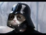Классные приколы с котами. Супер смешные коты. Видео приколы про котов. Улетные животные.