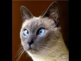 Смешные кошки 4 ? Приколы с животными лето 2014 ? Funny cats vine compilation ? Part 4