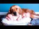 Дети и Собаки - Лицом к Лицу Лучший Сборник Приколы с Детьми 2015