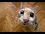 Смешное видео с кошками 2013 - Самое лучшее! Забавные кошки