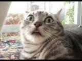 Подборка смешного видео про кошек 2015 // Funny cats video compilation 2015