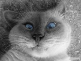 Самые смешные кошки. Забавные кошки. Видео про кошек.
