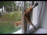 Видео приколы про кошек и котов. Смешное видео. Видео Приколы Ютуб - 6
