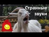 Животные кричат и издают смешные звуки. Забавные звуки животных (сборник 2)